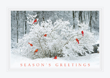 Winter Perch Christmas Cards